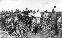 Puerto Ricans in the fields on Maui, circa 1920. In the plantation camps where laborers lived, managers segregated them by nationality.